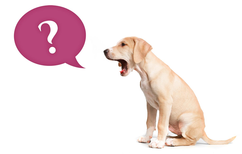 Hund med frågetecken - Grå listan